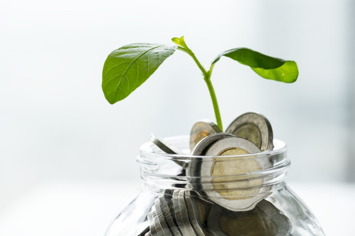 plant growing out of a coin jar
