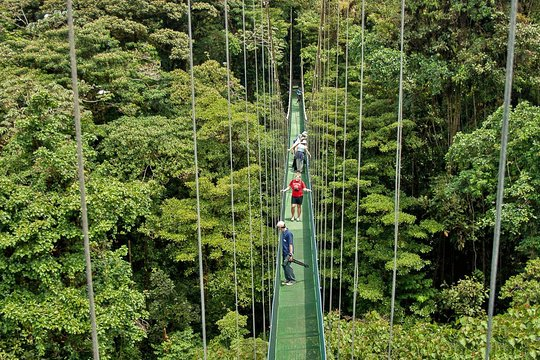 men on canopy walk in the jungle